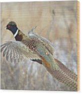 Glorious Pheasant Cock Wood Print