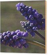 Glorious Purple Wood Print
