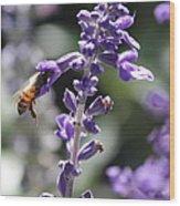 Glowing Bee In Purple Flowers Wood Print