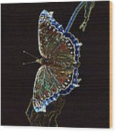Glowing Butterfly Wood Print