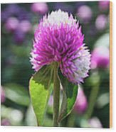 Glowing Globe Amaranth Wood Print