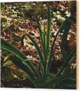 Glowing Iris Plant 3 Wood Print