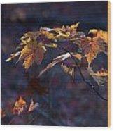 Glowing Maple Leaves Wood Print