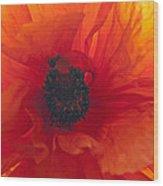 Glowing Poppy Wood Print