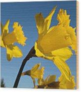 Glowing Yellow Daffodil Flowers Art Prints Spring Wood Print