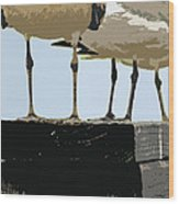 Glucosamine Candidates Wood Print