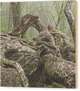 Gnarly Old Tree In Fog Along The Blue Ridge Parkway Wood Print by Bill Swindaman