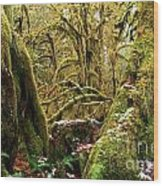 Gnomes In The Rainforest Wood Print