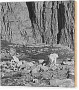 Goat Herd On Mount Evans Wood Print