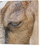 Goat Lashes Wood Print