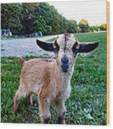 Goatee Wood Print