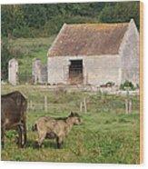 Goats Wood Print