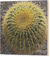 Gold Barrel Cactus   No 1 Wood Print