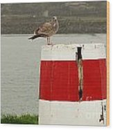Gold Beach Gull Wood Print
