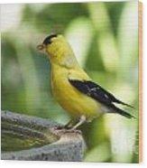 Gold Finch At The Bird Bath Wood Print