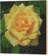 Gold Medal Rose Wood Print