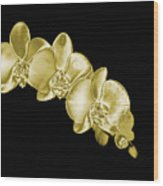 Gold Phaelenopsis Orchid On A Black Background Wood Print