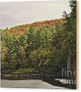 Gold Trimmed Trees Wood Print