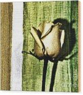 Gold Tulip Wood Print