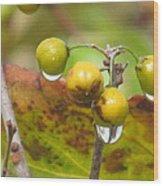 Golden Autumn Drops In Wood Print
