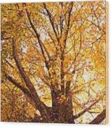 Golden Autumn View Wood Print
