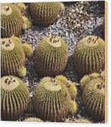 Golden Barrel Cactus 2 Wood Print