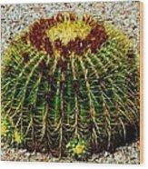 Golden Barrel Cactus Wood Print