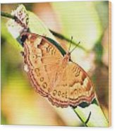 Golden Butterfly Wood Print