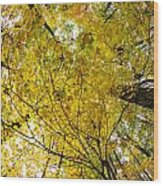 Golden Canopy Wood Print by Rick Berk
