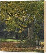 Golden Cappadocian Maple. Wood Print