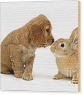 Golden Cocker Spaniel And Rabbit Wood Print
