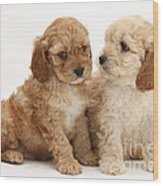 Golden Cockerpoo Puppies Wood Print