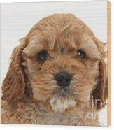 Golden Cockerpoo Puppy Wood Print