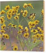 Golden Coreopsis Tickseed Wildflowers Wood Print