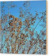 Golden Crepe Myrtle Seeds Wood Print