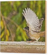 Golden Crowned Sparrow Wood Print
