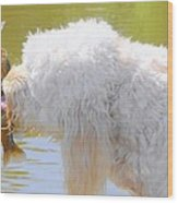 Golden Doodle And Goggle Eye Wood Print