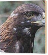 Golden Eagle - 0001 Wood Print