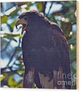 Golden Eagle II Wood Print