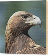 Golden Eagle In Profile Wood Print