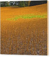 Golden Field Wood Print by Luba Citrin