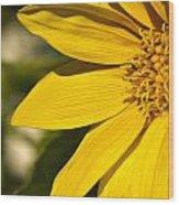 Golden Flower 1 Wood Print