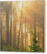 Golden Fog Thru The Trees Wood Print