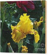 Golden Glory Wood Print by Donna Parlow