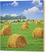Golden Hay Bales In Green Field Wood Print by Elena Elisseeva
