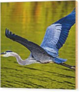 Golden Heron Wood Print