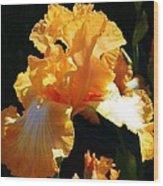 Golden King Wood Print