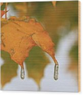 Golden Leaves Silvery Drops Wood Print