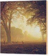 Golden Light Of California Wood Print