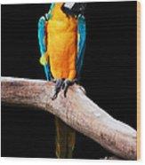 Golden Macaw Wood Print